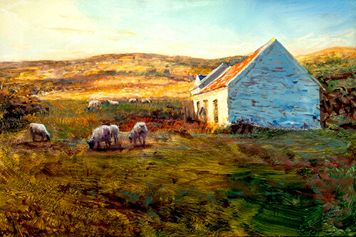 Vincent Crotty Ballyheigue Sheep